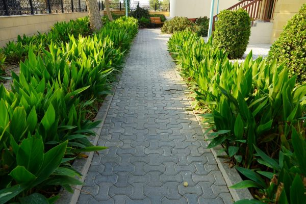 Scenic View Of Landscaped Path With Plants And Stones In Yard. B